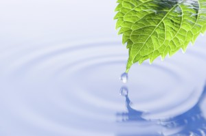 a leaf over a body of water with a droplet on the tip falling into it